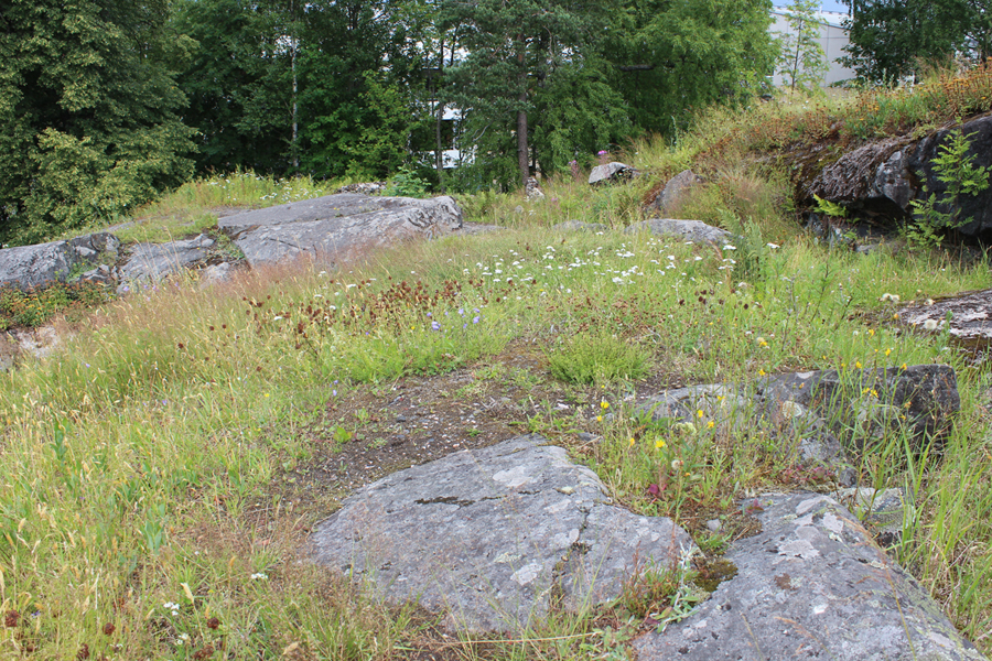 Linkki tapahtumaan  Geologiaretki Kalkkikalliolle ja Roosinmäelle - lehtoa ja kalkkikasveja