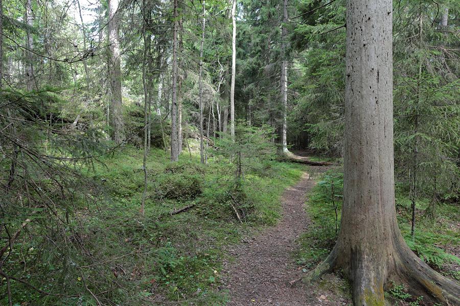 Linkki tapahtumaan  Luontoretki: Uutelan kesäyön tuoksuja ja laulajia