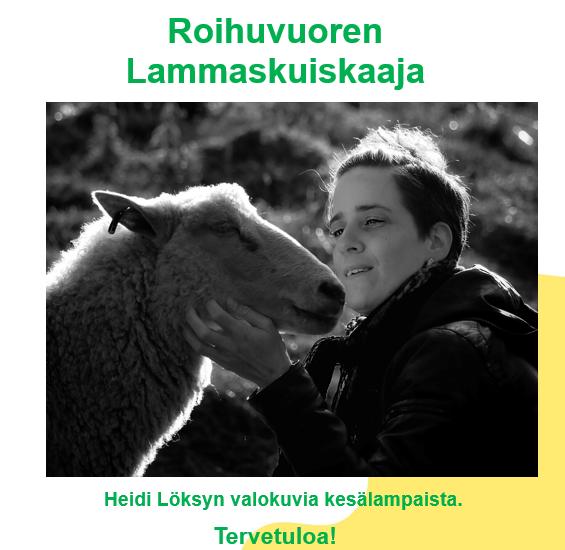 Linkki tapahtumaan Roihuvuoren lammaskuiskaaja
