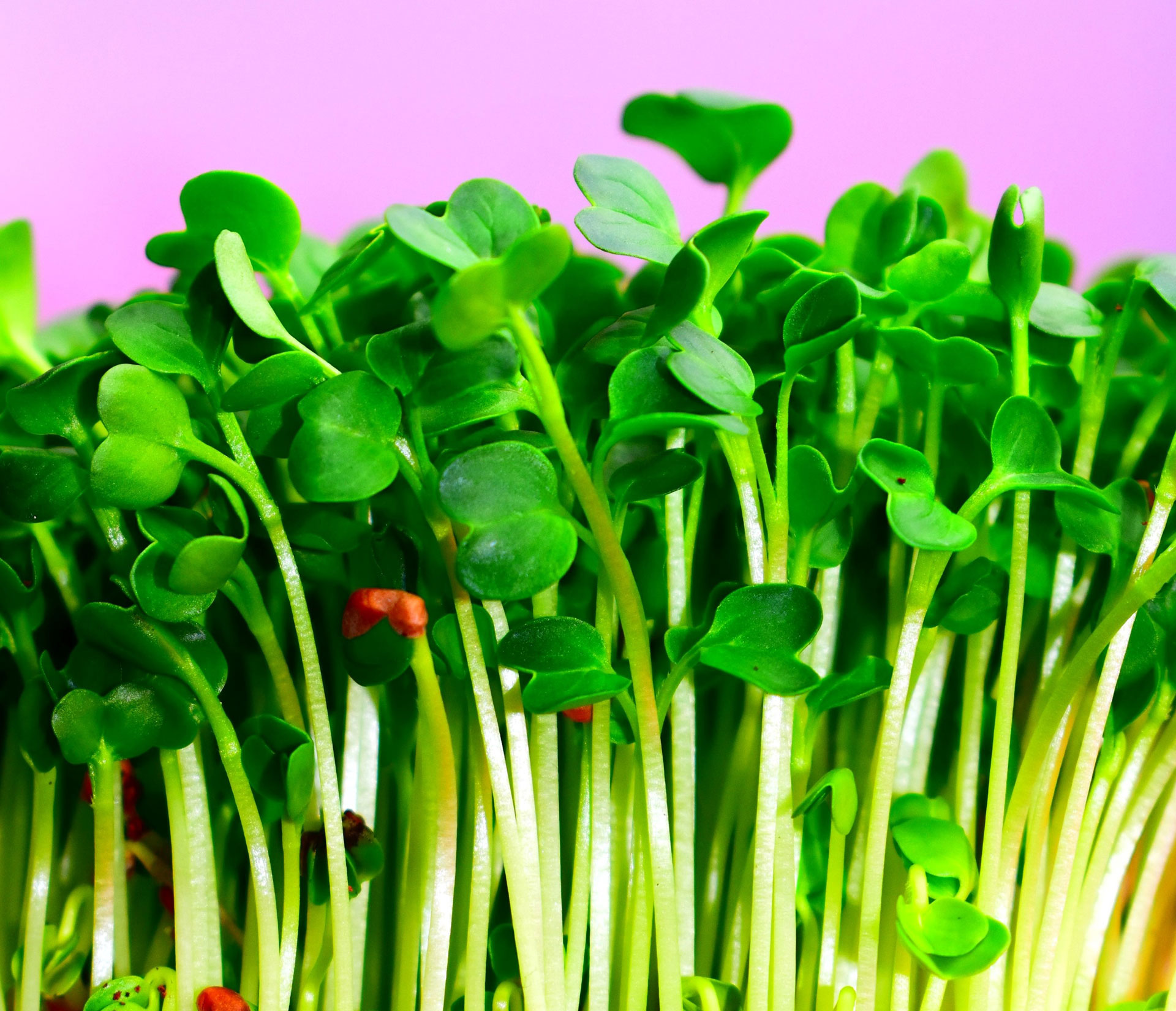 Link to event Microgreens Workshop
