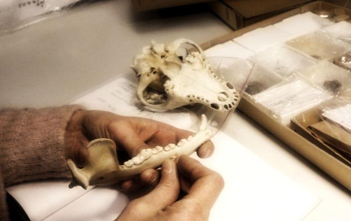 Linkki tapahtumaan Arkeologia tänään: Mitä uutta luusta?
