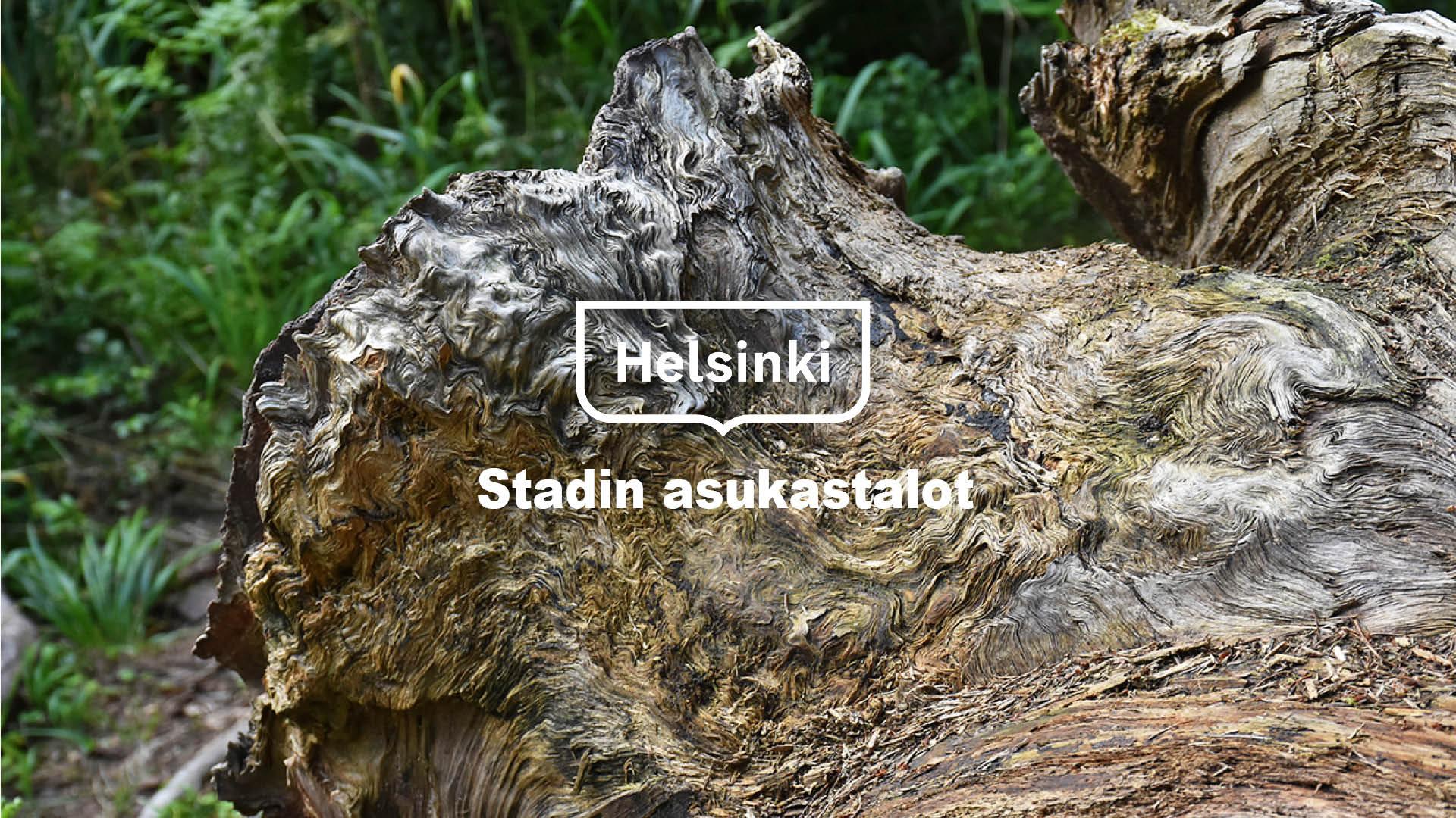 Linkki tapahtumaan Valokuvanäyttely - Menninkäisen metsä
