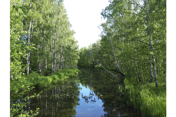 Linkki tapahtumaan Luontoretki: Talin ja Mätäjoen kesän rehevyyttä