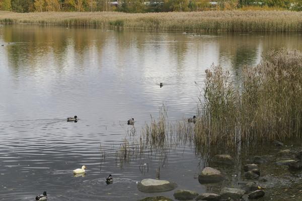 Linkki tapahtumaan Suomen luonnon päivän retki Töölönlahdelle
