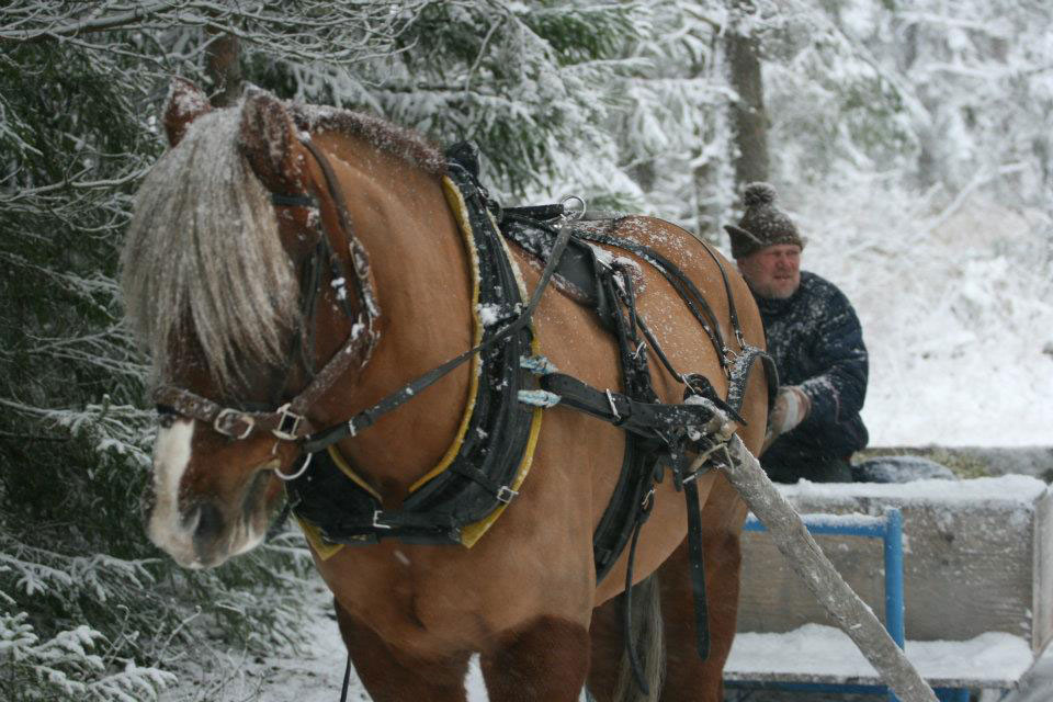 Link to event Sleigh ride on Shrove Sunday