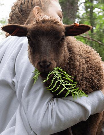 Lammas ihmisen sylissä.