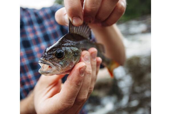 Link to event  Koko perheen kalastustapahtuma Harakan saarella