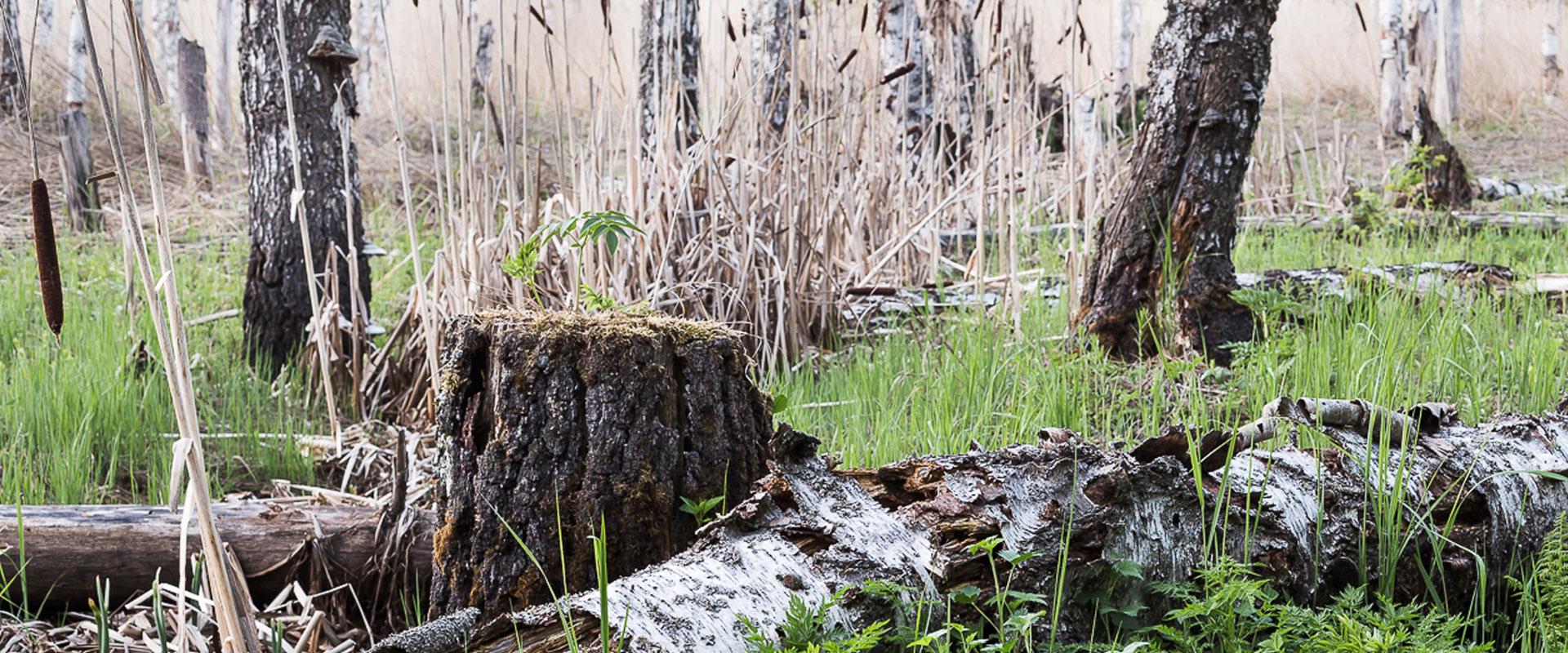 Linkki tapahtumaan Pihkassa puihin