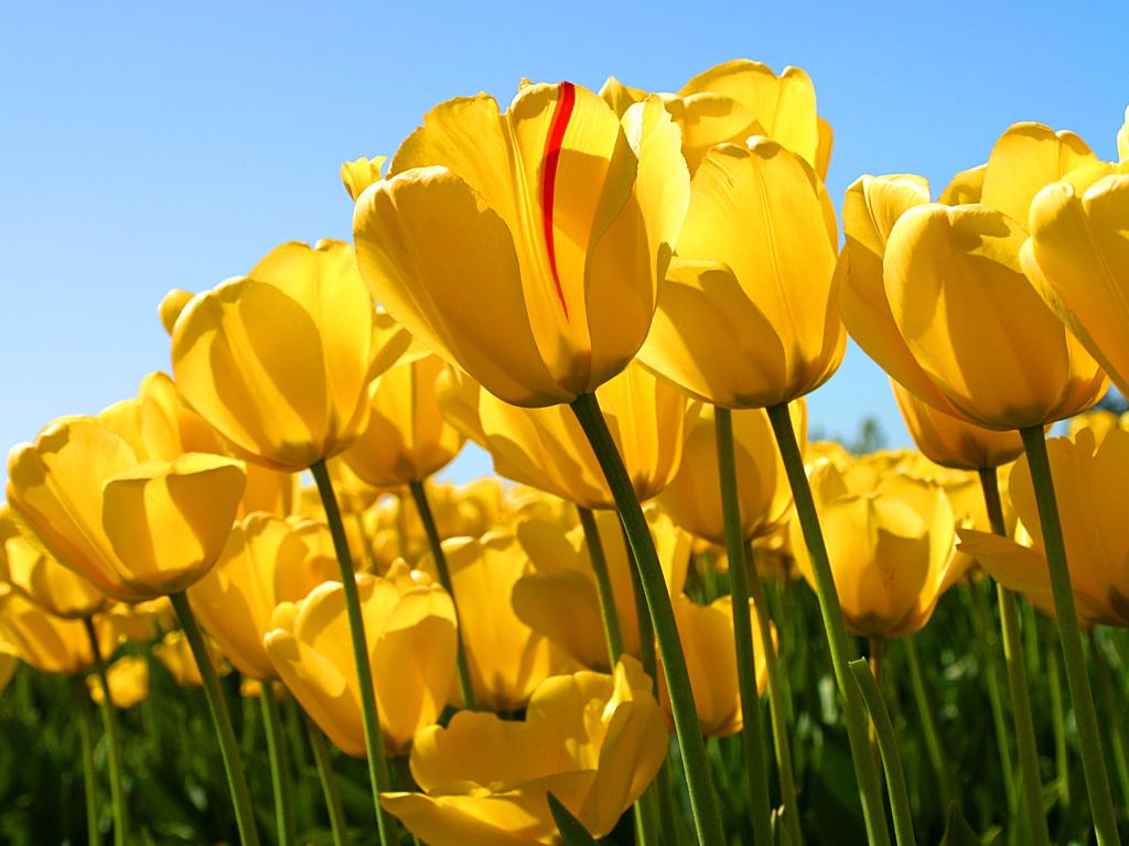 Linkki tapahtumaan PERUUTETTU: Kevätjuhla Torpparinmäessä